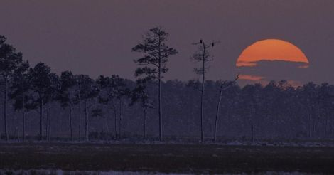A setting sun on Maryland wild lands.  Photo: John and Karen Hollingsworth, U.S. Fish and Wildlife Service